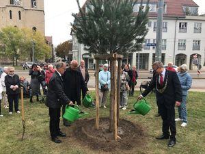 Drei Bäume für Deutschlands Einheit