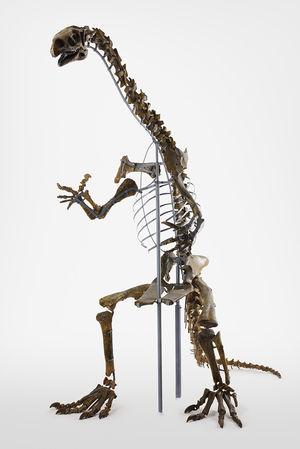 Plateosaurus, Foto: Enver Hirsch